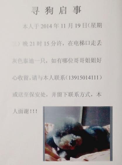 【灰色泰迪】走失于尚东区花园小区,心肝头丢了,我心里非常难受!
