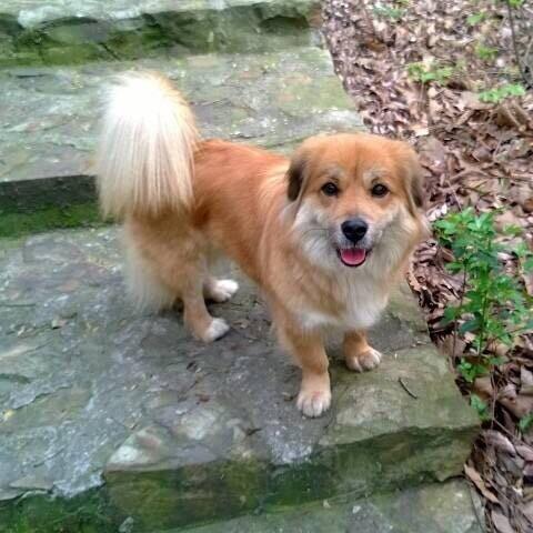 武进隔湖中路常州大学至工程学院之间路段丢失一只黄色中型犬!